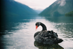 Using Captives to Insure Against Black Swan Events